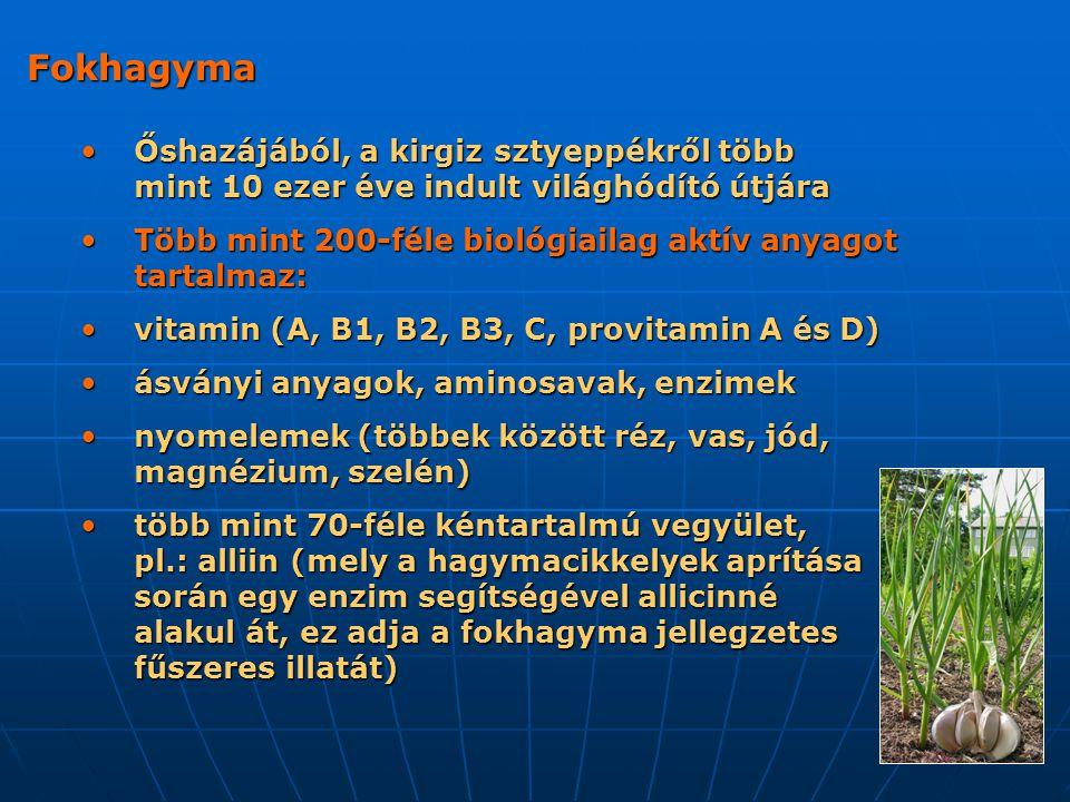 Fokhagyma Őshazájából, a kirgiz sztyeppékről több mint 10 ezer éve indult világhódító útjára Őshazájából, a kirgiz sztyeppékről több mint 10 ezer éve