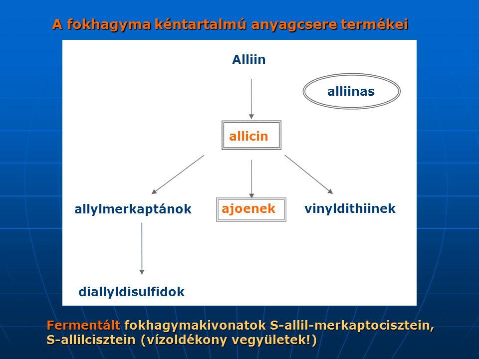 A fokhagyma kéntartalmú anyagcsere termékei Alliin alliinas allicin diallyldisulfidok allylmerkaptánok ajoenek vinyldithiinek Fermentált fokhagymakivo