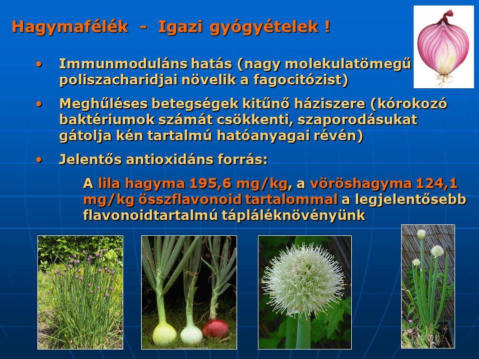 Hagymafélék - Igazi gyógyételek ! Immunmoduláns hatás (nagy molekulatömegű poliszacharidjai növelik a fagocitózist) Immunmoduláns hatás (nagy molekula