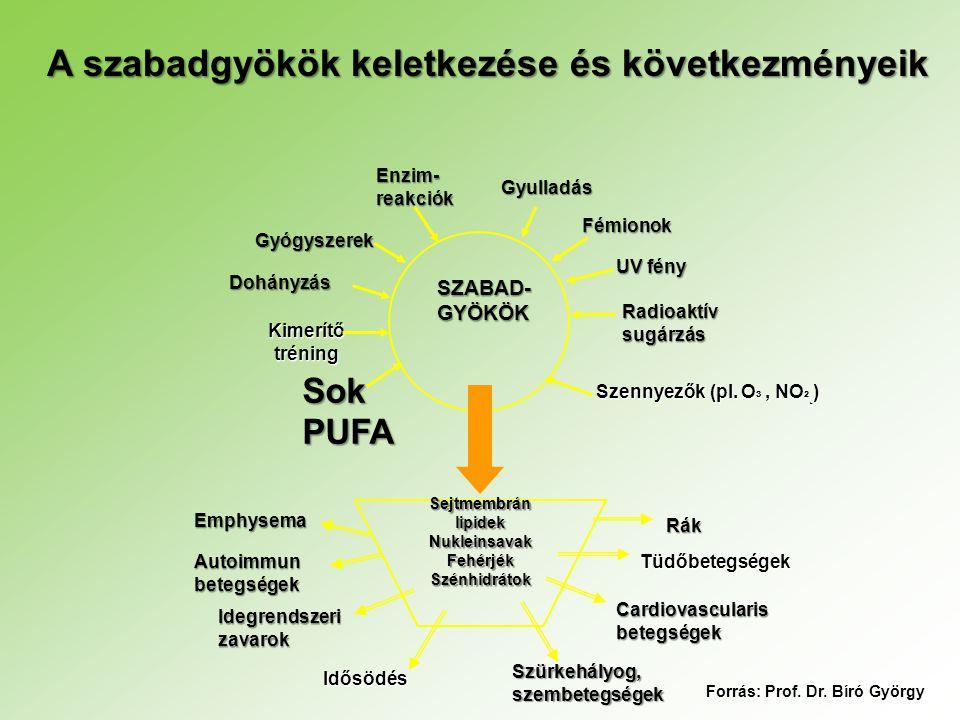 SZABAD- GYÖKÖK Gyógyszerek Enzim- reakciók Gyulladás Fémionok UV fény Radioaktív sugárzás Dohányzás Kimerítő tréning Sok PUFA Szennyezők (pl. O ³, NO