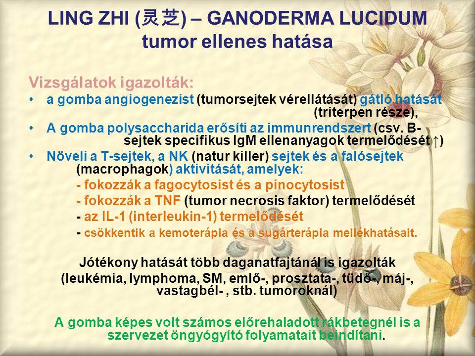 LING ZHI ( 灵芝 ) – GANODERMA LUCIDUM tumor ellenes hatása Vizsgálatok igazolták: a gomba angiogenezist (tumorsejtek vérellátását) gátló hatását (triter