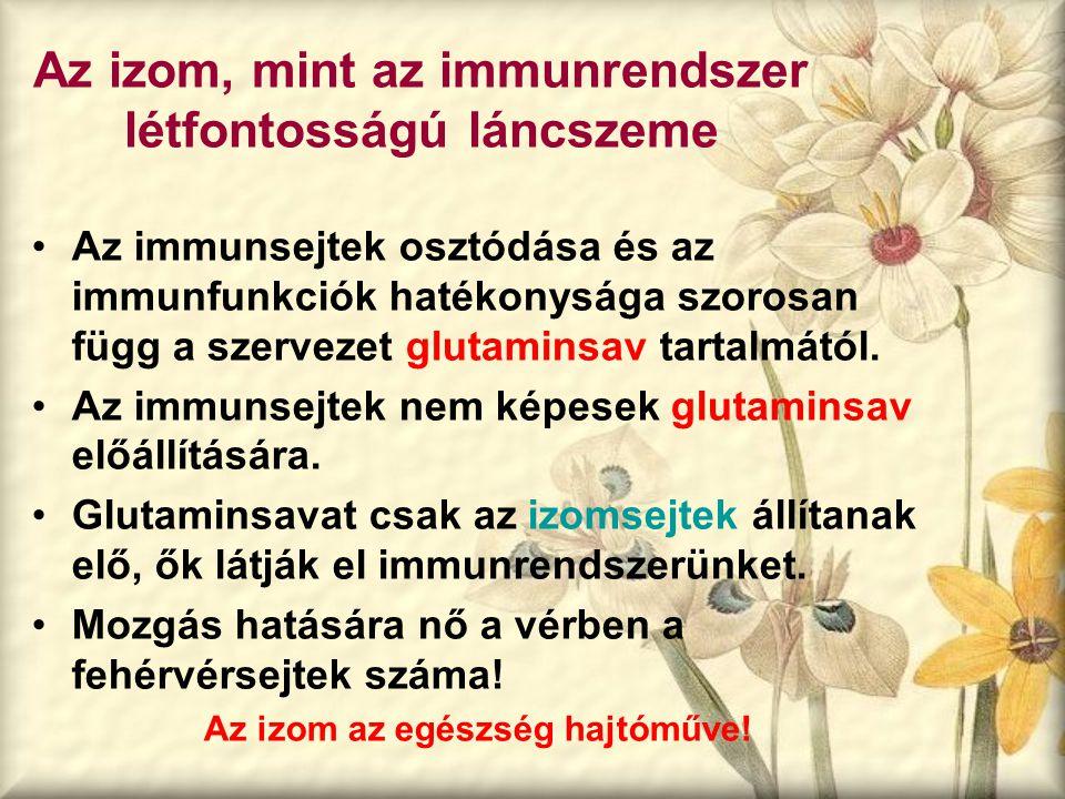 Az izom, mint az immunrendszer létfontosságú láncszeme Az immunsejtek osztódása és az immunfunkciók hatékonysága szorosan függ a szervezet glutaminsav