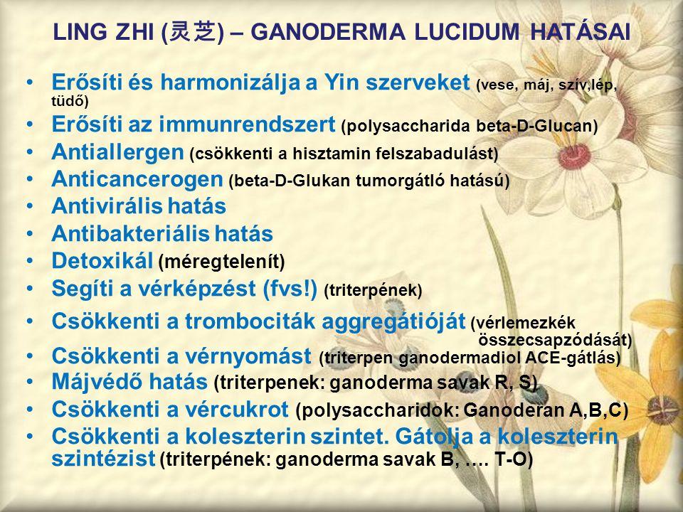 LING ZHI ( 灵芝 ) – GANODERMA LUCIDUM HATÁSAI Erősíti és harmonizálja a Yin szerveket (vese, máj, szív,lép, tüdő) Erősíti az immunrendszert (polysacchar
