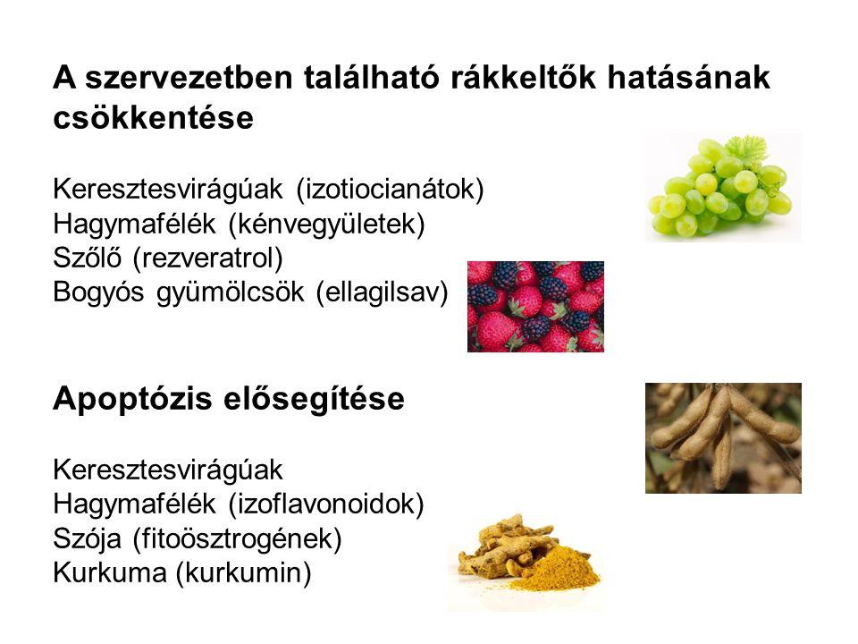 A szervezetben található rákkeltők hatásának csökkentése Keresztesvirágúak (izotiocianátok) Hagymafélék (kénvegyületek) Szőlő (rezveratrol) Bogyós gyü