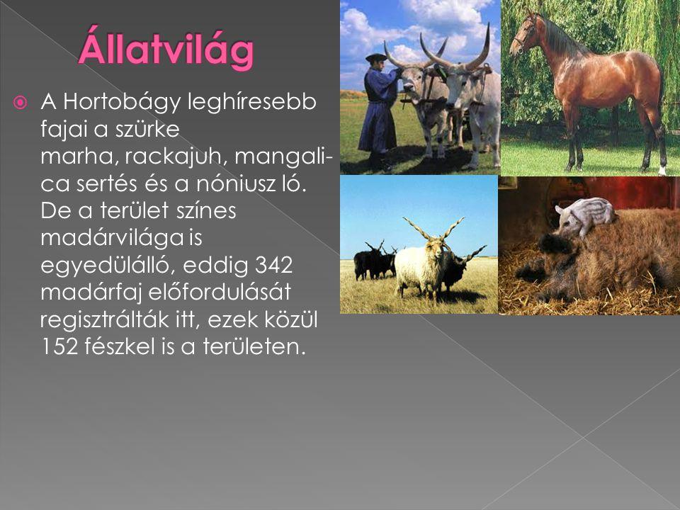  A Hortobágy leghíresebb fajai a szürke marha, rackajuh, mangali- ca sertés és a nóniusz ló. De a terület színes madárvilága is egyedülálló, eddig 34