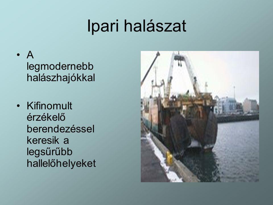Ipari halászat A legmodernebb halászhajókkal Kifinomult érzékelő berendezéssel keresik a legsűrűbb hallelőhelyeket
