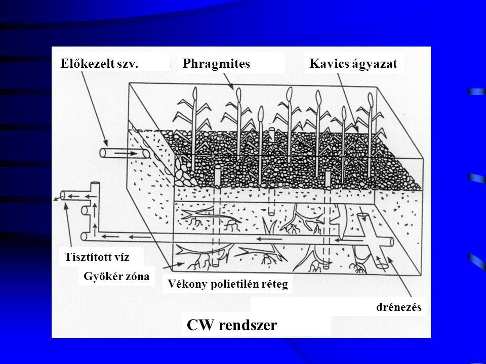 Előkezelt szv.PhragmitesKavics ágyazat Tisztított víz Gyökér zóna Vékony polietilén réteg drénezés CW rendszer