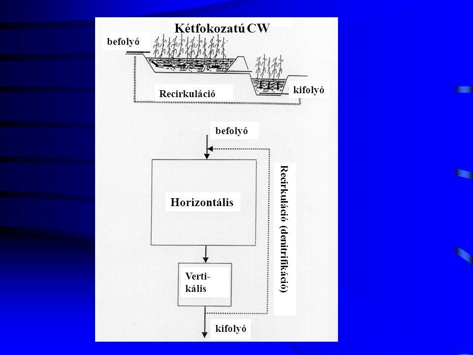 Kétfokozatú CW befolyó kifolyó Recirkuláció befolyó Horizontális Verti- kális kifolyó Recirkuláció (denitrifikáció)