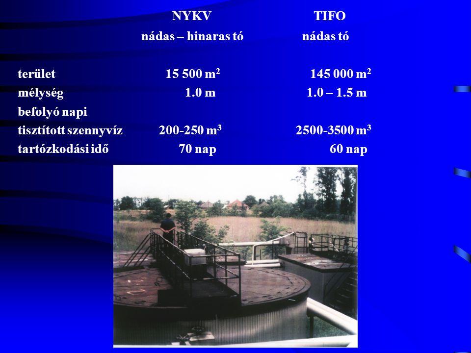 NYKV TIFO nádas – hinaras tó nádas tó terület 15 500 m 2 145 000 m 2 mélység 1.0 m 1.0 – 1.5 m befolyó napi tisztított szennyvíz 200-250 m 3 2500-3500