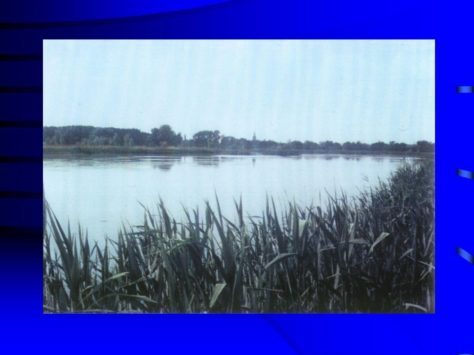 TIFO létesített vizes élőhely (constructed wetlands) algás tóegység halas tóegység nádas tóegység nádas tóegység (reed pond): enyhén lúgos Na-Ca-HCO 3 -SO 4 oxigéntelítettség 70% TP eltávolítás 40% TN 35% Brix (1994)Michail és mtsa.