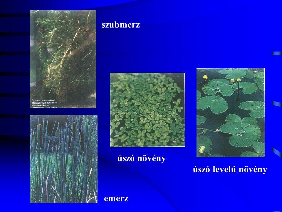 szubmerz emerz úszó növény úszó levelű növény