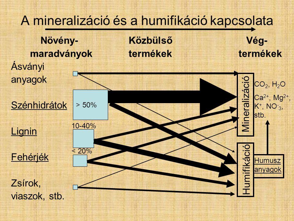 A mineralizáció és a humifikáció kapcsolata Növény-KözbülsőVég- maradványoktermékek termékek Ásványi anyagok Szénhidrátok Lignin Fehérjék Zsírok, viaszok, stb.