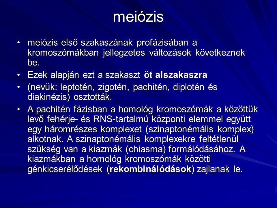 meiózis meiózis első szakaszának profázisában a kromoszómákban jellegzetes változások következnek be.