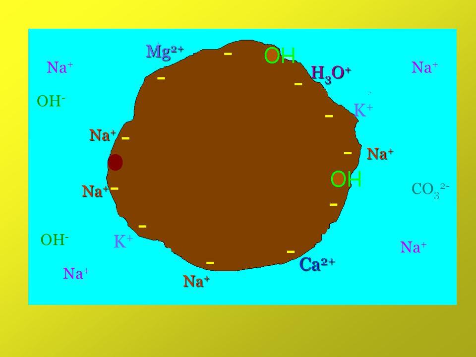 K+K+ Na + Ca 2+ H3O+H3O+H3O+H3O+ K+K+ Mg 2+ Na + OH - CO 3 2-