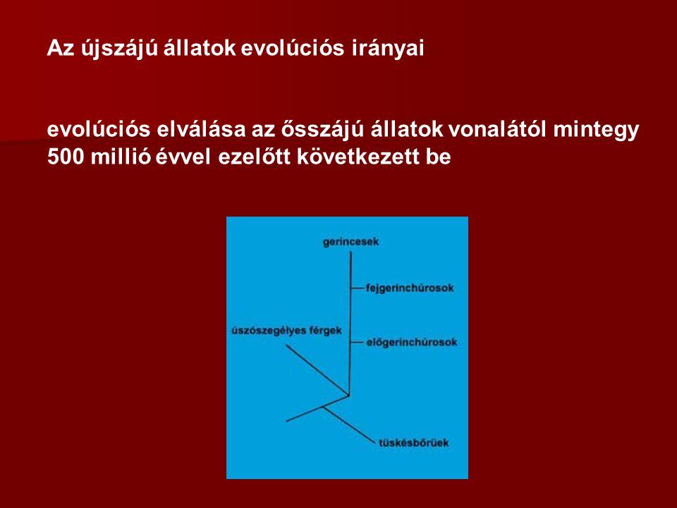 Az újszájú állatok evolúciós irányai evolúciós elválása az ősszájú állatok vonalától mintegy 500 millió évvel ezelőtt következett be