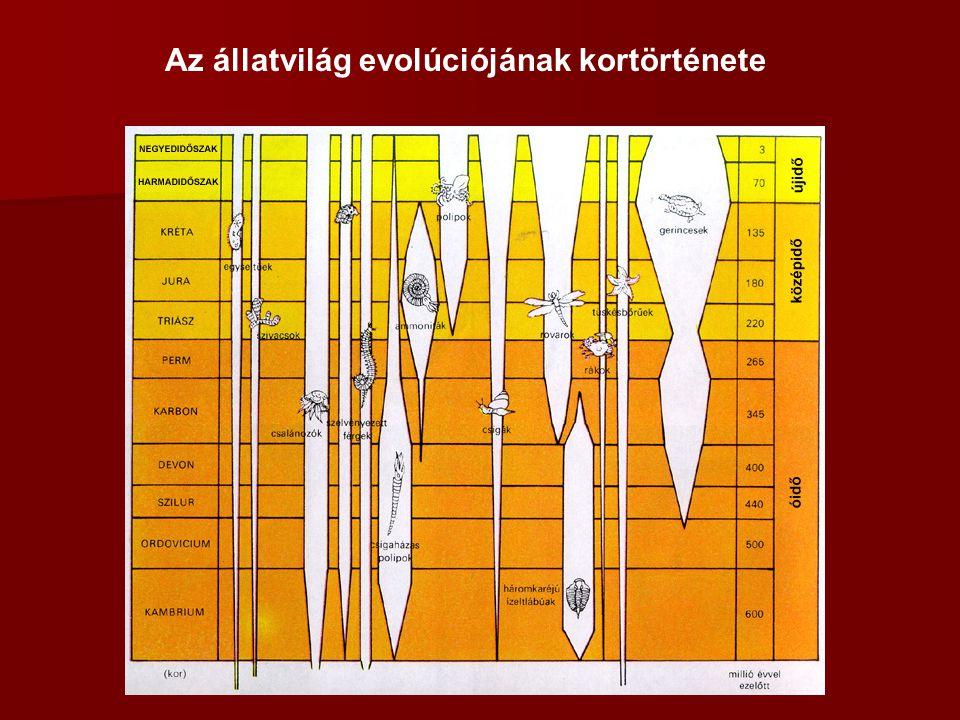 Puhatestűek (Mollusca) Az ősszájúak másik evolúciós csúcspontjának a laposférgekből származtatható puhatestűek tekinthetők.puhatestűek t estük megőrizte szelvényezetlenségét, jellegzetességük a többségükre jellemző külső meszes váz.