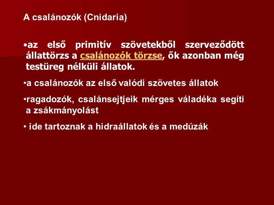 Fontosabb rendjeik: Rovarevők: pl.