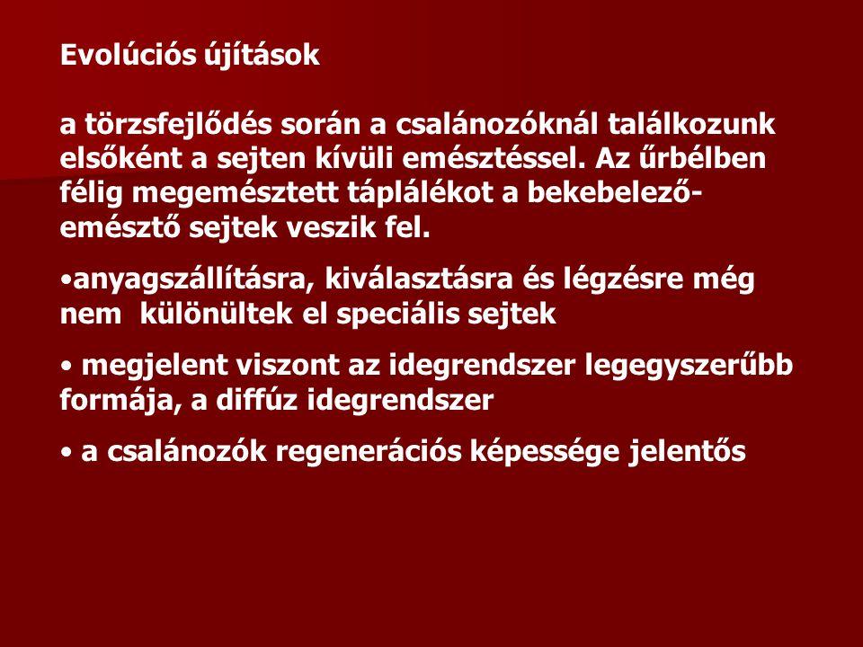 Ragadozók: pl.