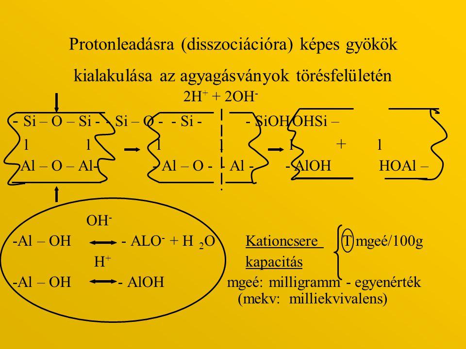 Protonleadásra (disszociációra) képes gyökök kialakulása az agyagásványok törésfelületén 2H + + 2OH - - Si – O – Si -- Si – O - - Si - - SiOHOHSi – l