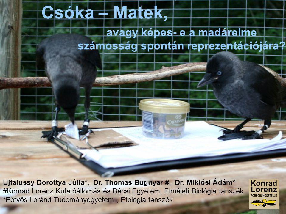 Csóka – Matek, avagy képes- e a madárelme számosság spontán reprezentációjára? Ujfalussy Dorottya Júlia*, Dr. Thomas Bugnyar #, Dr. Miklósi Ádám* #Kon