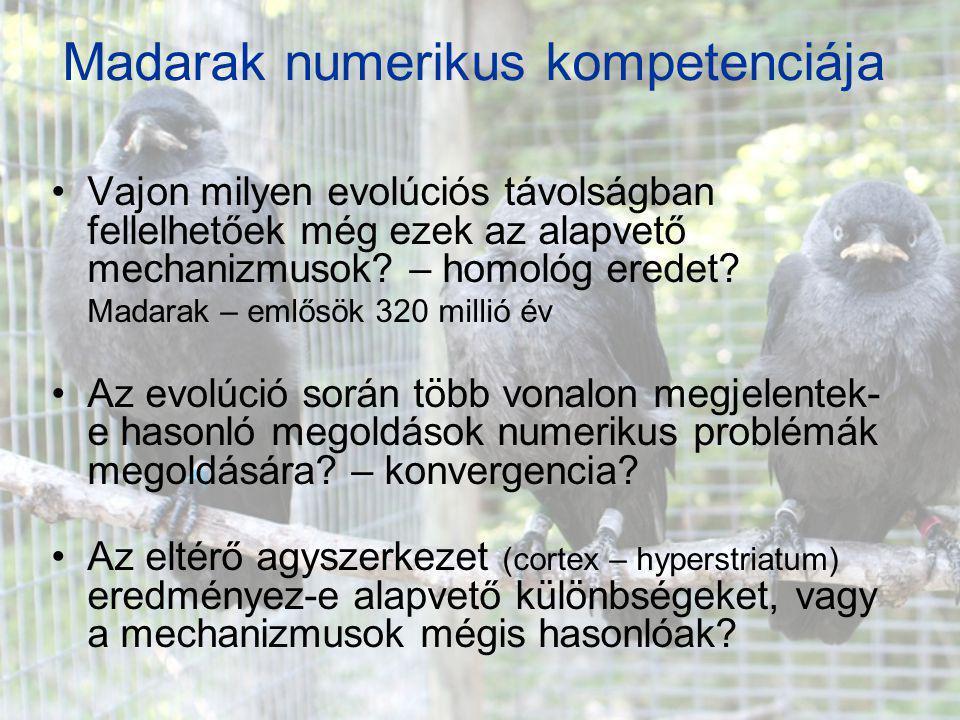 Madarak numerikus kompetenciája Vajon milyen evolúciós távolságban fellelhetőek még ezek az alapvető mechanizmusok? – homológ eredet? Madarak – emlősö