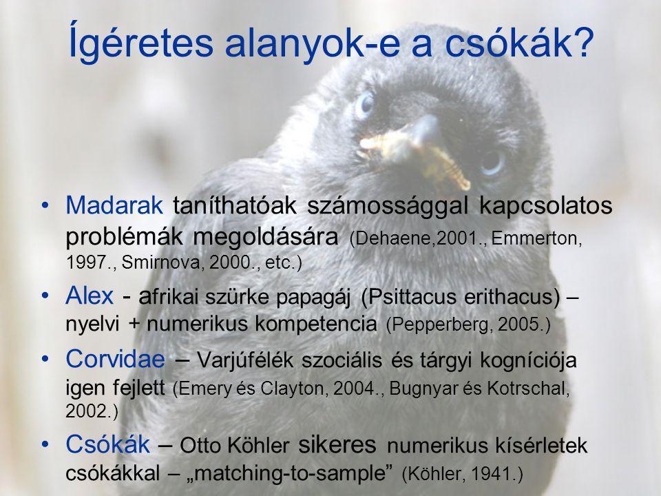 Ígéretes alanyok-e a csókák? Madarak taníthatóak számossággal kapcsolatos problémák megoldására (Dehaene,2001., Emmerton, 1997., Smirnova, 2000., etc.