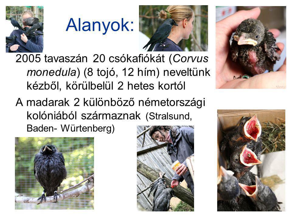 Alanyok: 2005 tavaszán 20 csókafiókát (Corvus monedula) (8 tojó, 12 hím) neveltünk kézből, körülbelül 2 hetes kortól A madarak 2 különböző németországi kolóniából származnak (Stralsund, Baden- Würtenberg)