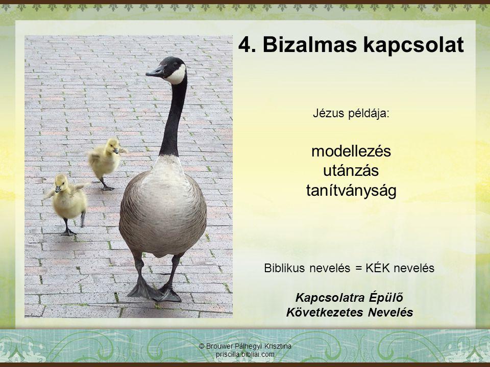 © Brouwer Pálhegyi Krisztina priscilla.bibliai.com 4. Bizalmas kapcsolat Biblikus nevelés = KÉK nevelés Kapcsolatra Épülő Következetes Nevelés Jézus p