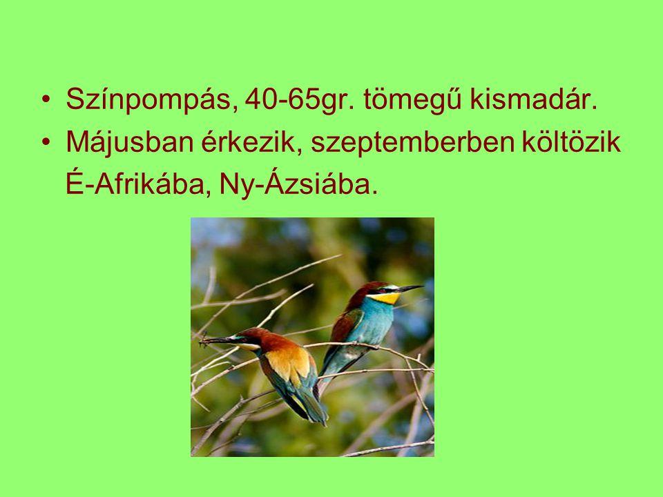 Színpompás, 40-65gr. tömegű kismadár. Májusban érkezik, szeptemberben költözik É-Afrikába, Ny-Ázsiába.