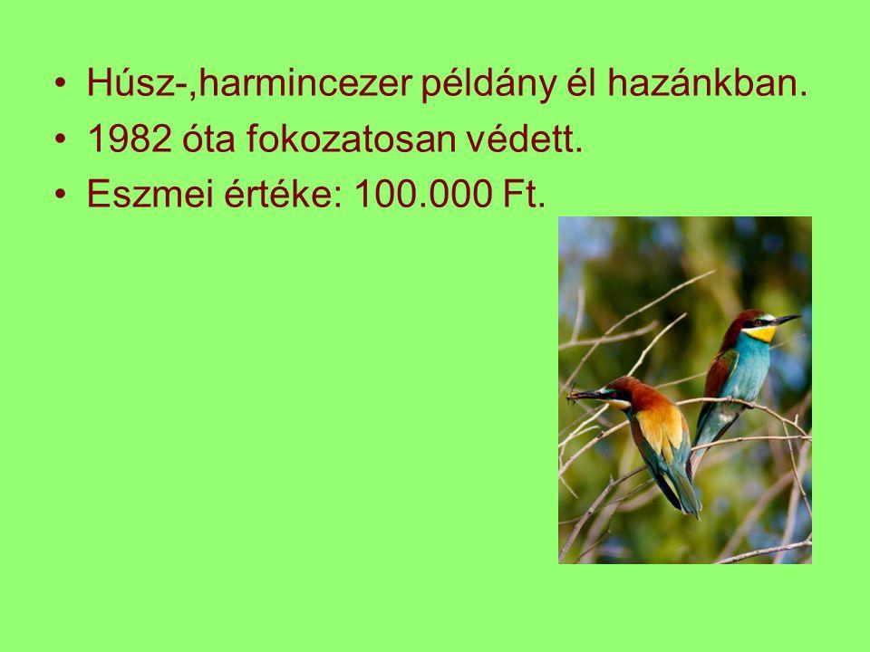 Húsz-,harmincezer példány él hazánkban. 1982 óta fokozatosan védett. Eszmei értéke: 100.000 Ft.