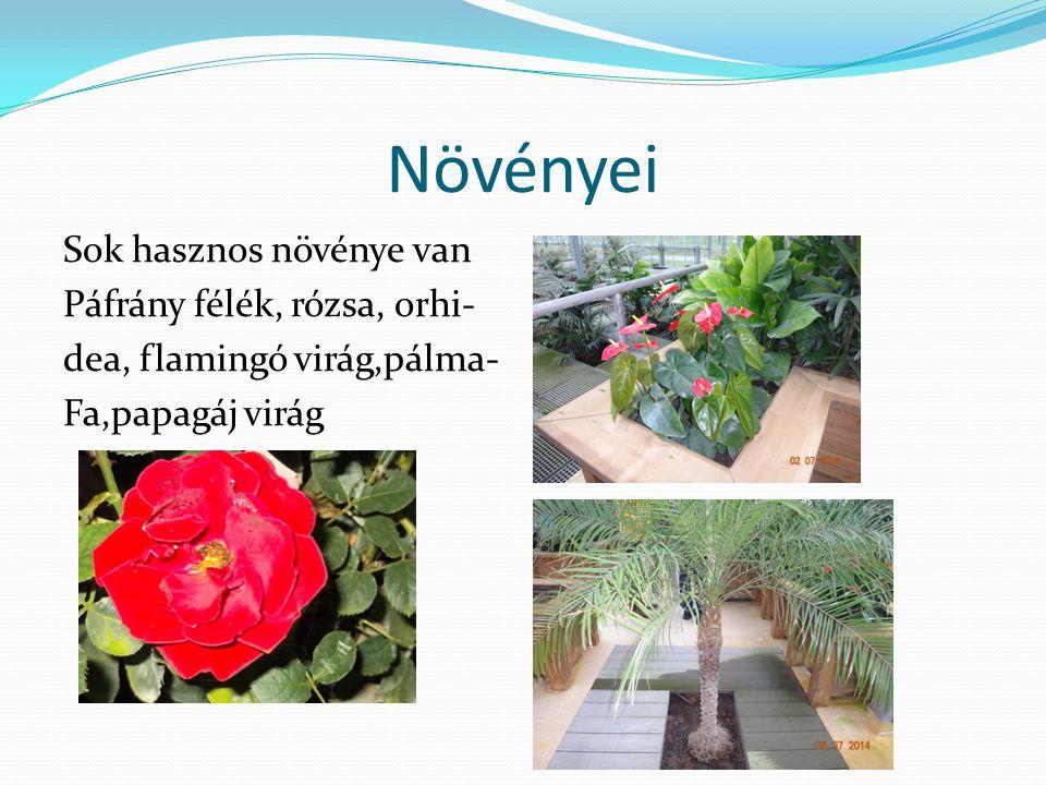 Növényei Sok hasznos növénye van Páfrány félék, rózsa, orhi- dea, flamingó virág,pálma- Fa,papagáj virág