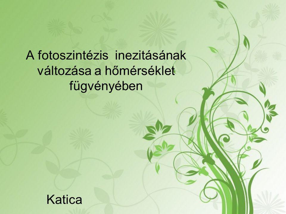 A fotoszintézis inezitásának változása a hőmérséklet fügvényében Katica