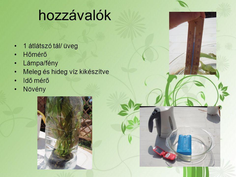 hozzávalók 1 átlátszó tál/ üveg Hőmérő Lámpa/fény Meleg és hideg víz kikészítve Idő mérő Növény