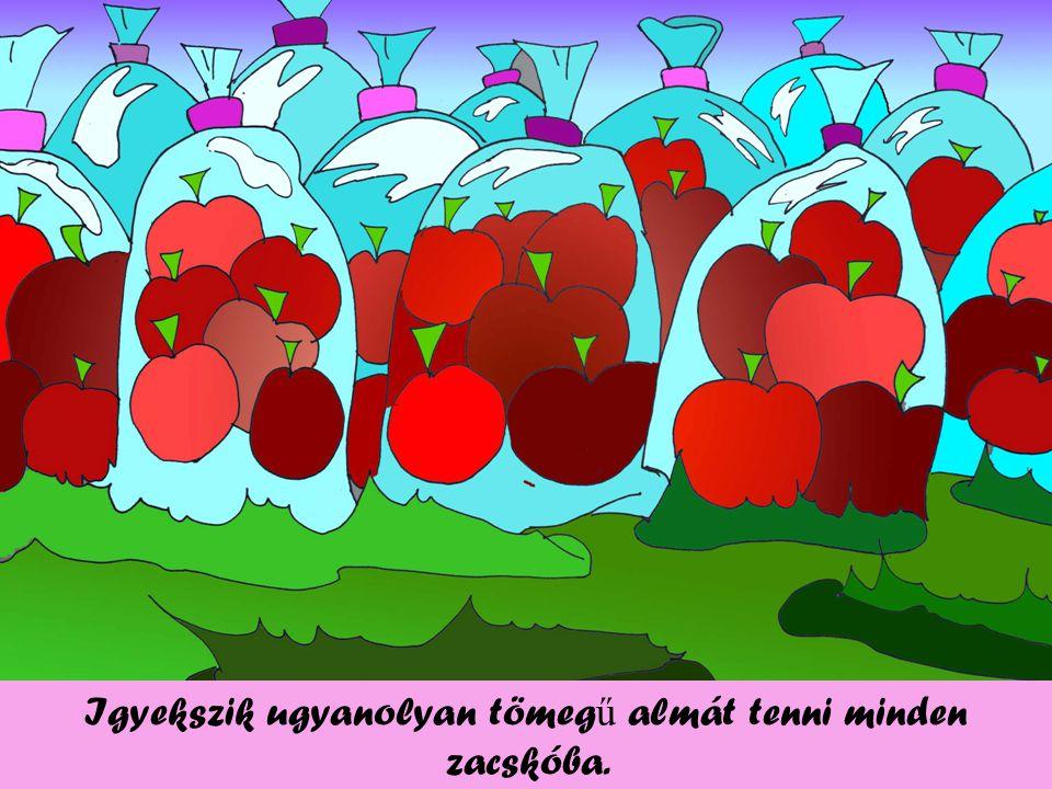 Igyekszik ugyanolyan tömeg ű almát tenni minden zacskóba.