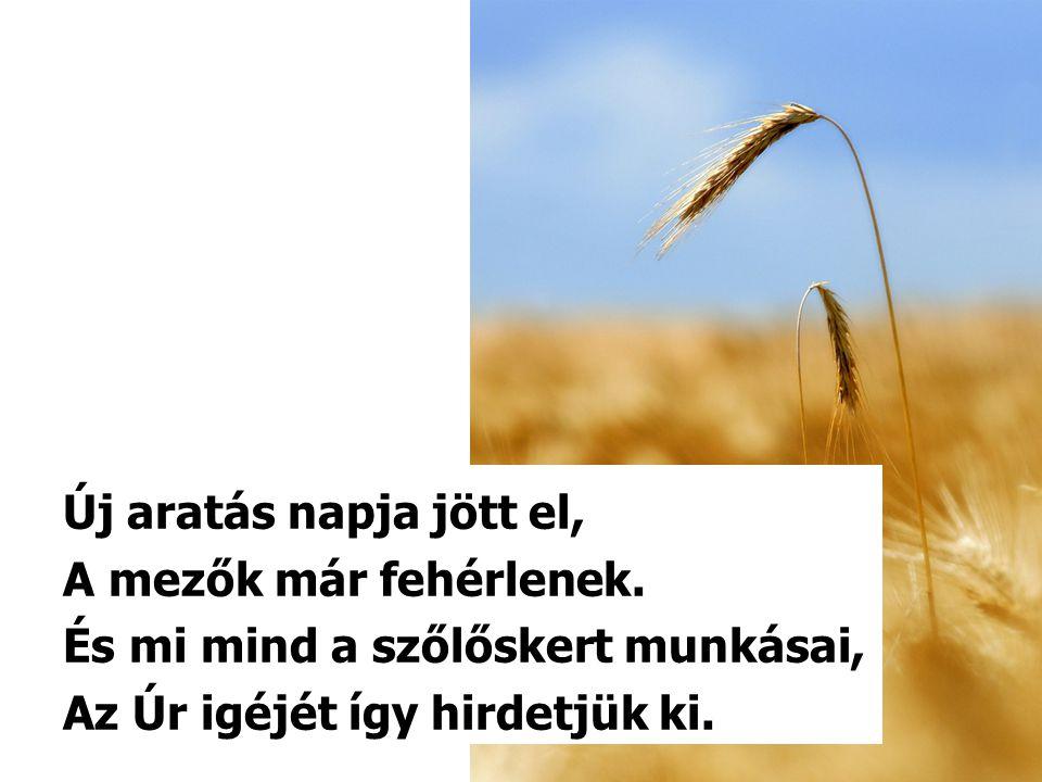 Új aratás napja jött el, A mezők már fehérlenek. És mi mind a szőlőskert munkásai, Az Úr igéjét így hirdetjük ki.