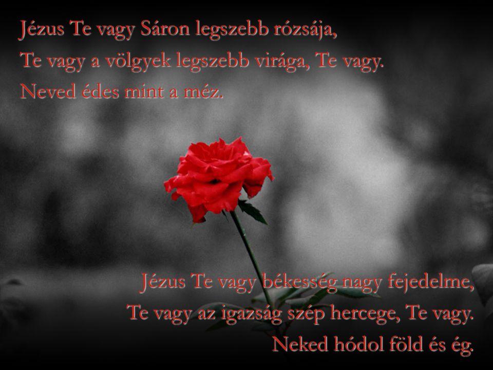 Jézus Te vagy Sáron legszebb rózsája, Te vagy a völgyek legszebb virága, Te vagy. Neved édes mint a méz. Jézus Te vagy békesség nagy fejedelme, Te vag
