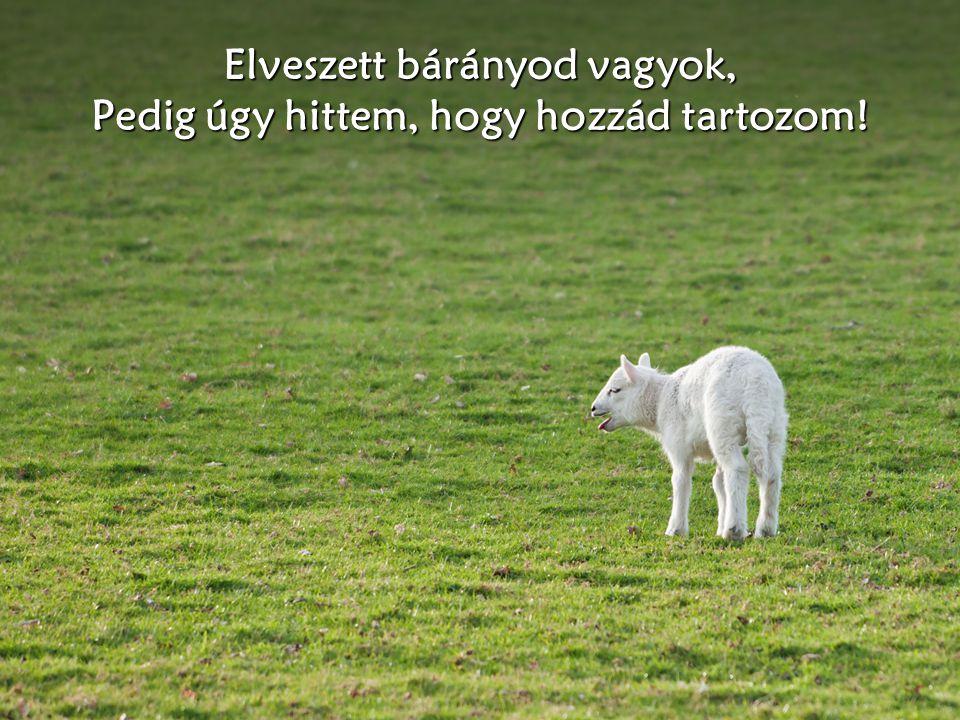 Elveszett bárányod vagyok, Pedig úgy hittem, hogy hozzád tartozom!