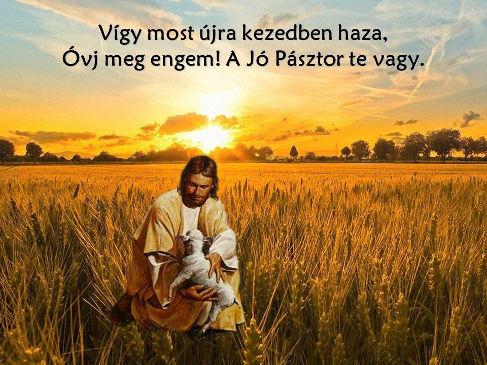 Vígy most újra kezedben haza, Óvj meg engem! A Jó Pásztor te vagy.