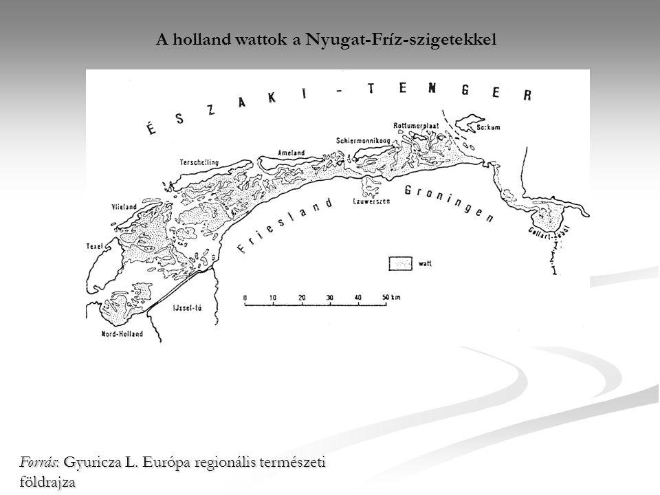 A holland wattok a Nyugat-Fríz-szigetekkel Forrás: Gyuricza L. Európa regionális természeti földrajza