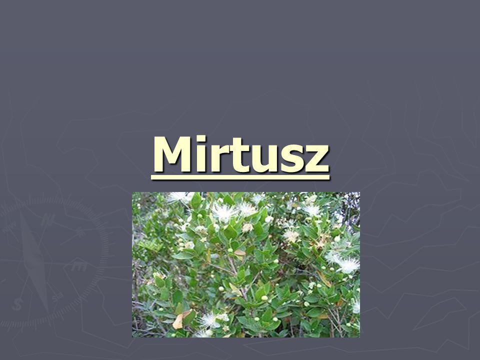 Mirtusz