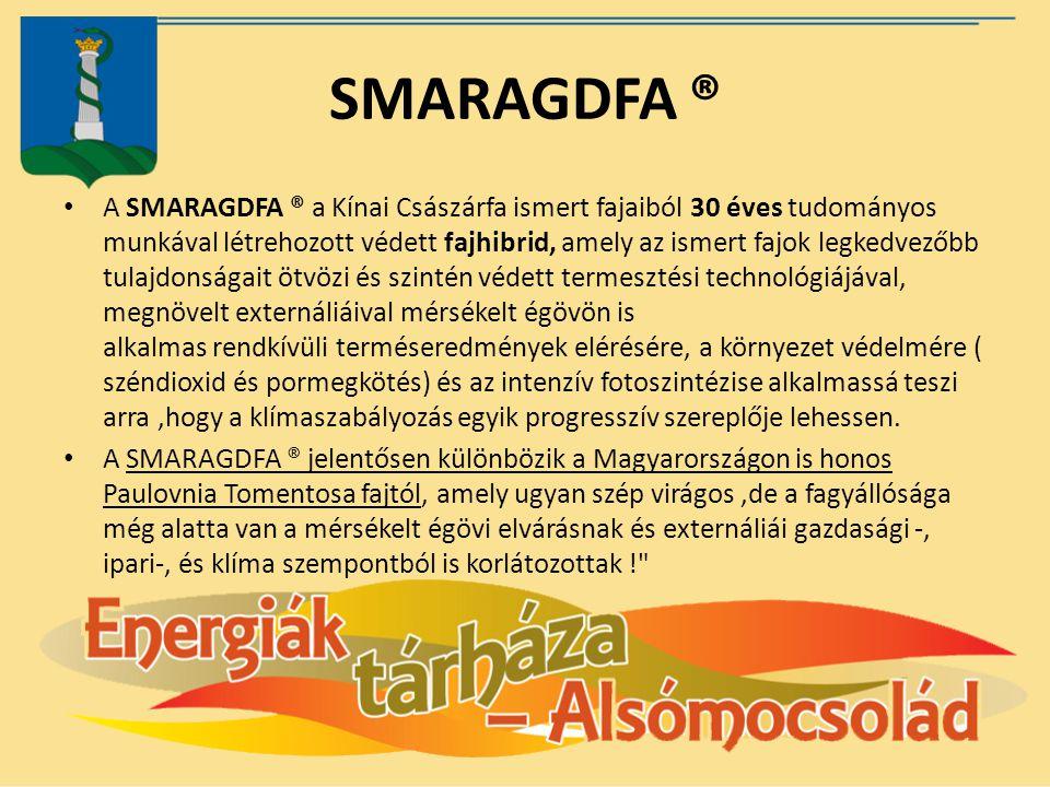 SMARAGDFA ® A SMARAGDFA ® a Kínai Császárfa ismert fajaiból 30 éves tudományos munkával létrehozott védett fajhibrid, amely az ismert fajok legkedvező