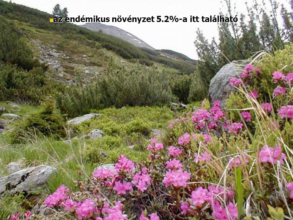az endémikus növényzet 5.2%-a itt található az endémikus növényzet 5.2%-a itt található