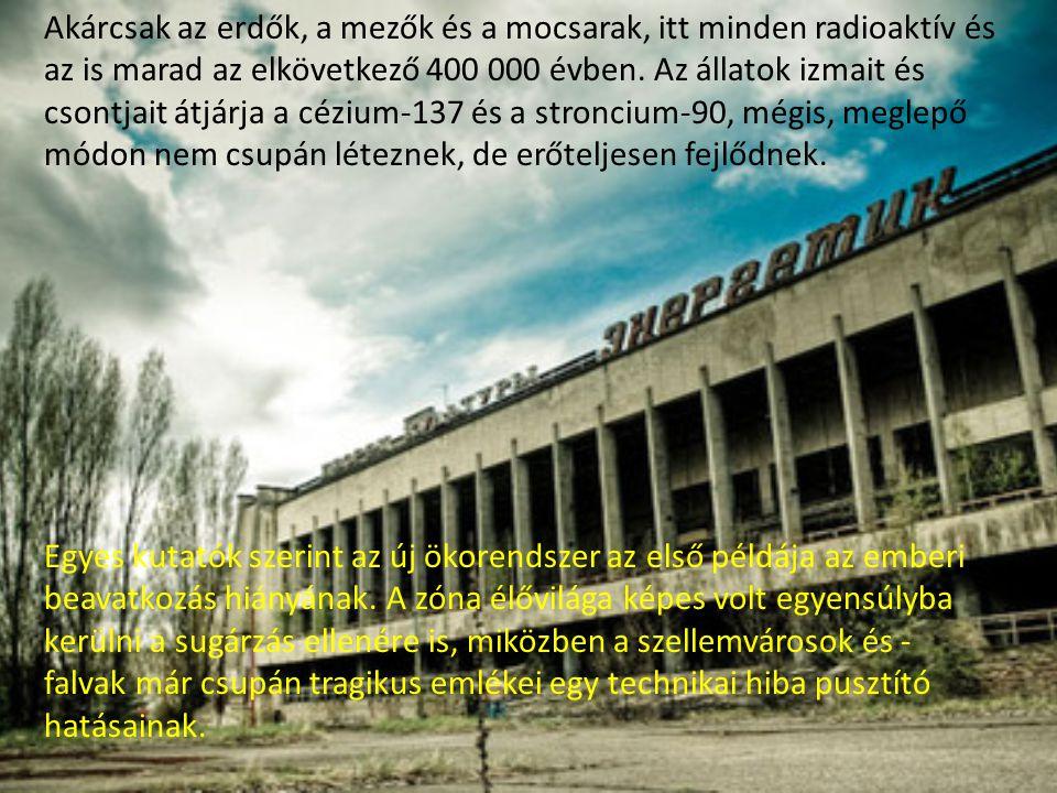 Csernobilt a történelem legnagyobb természeti katasztrófájaként értékelik világszerte, az erőmű körüli biztonsági zóna kiürítése paradox módon mégis a természet virágzásához vezetett.