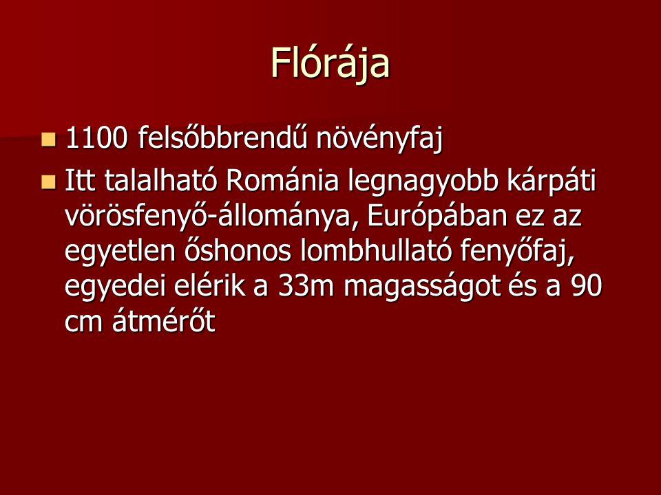 Flórája 1100 felsőbbrendű növényfaj 1100 felsőbbrendű növényfaj Itt talalható Románia legnagyobb kárpáti vörösfenyő-állománya, Európában ez az egyetlen őshonos lombhullató fenyőfaj, egyedei elérik a 33m magasságot és a 90 cm átmérőt Itt talalható Románia legnagyobb kárpáti vörösfenyő-állománya, Európában ez az egyetlen őshonos lombhullató fenyőfaj, egyedei elérik a 33m magasságot és a 90 cm átmérőt