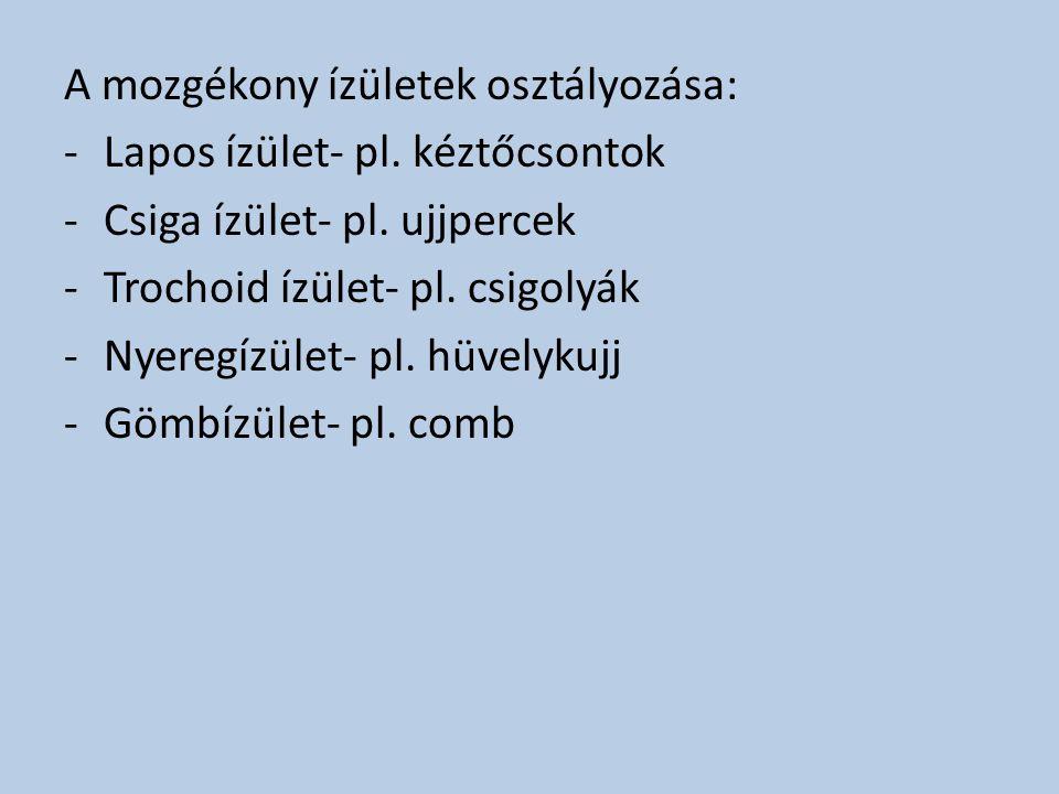 A mozgékony ízületek osztályozása: -Lapos ízület- pl. kéztőcsontok -Csiga ízület- pl. ujjpercek -Trochoid ízület- pl. csigolyák -Nyeregízület- pl. hüv