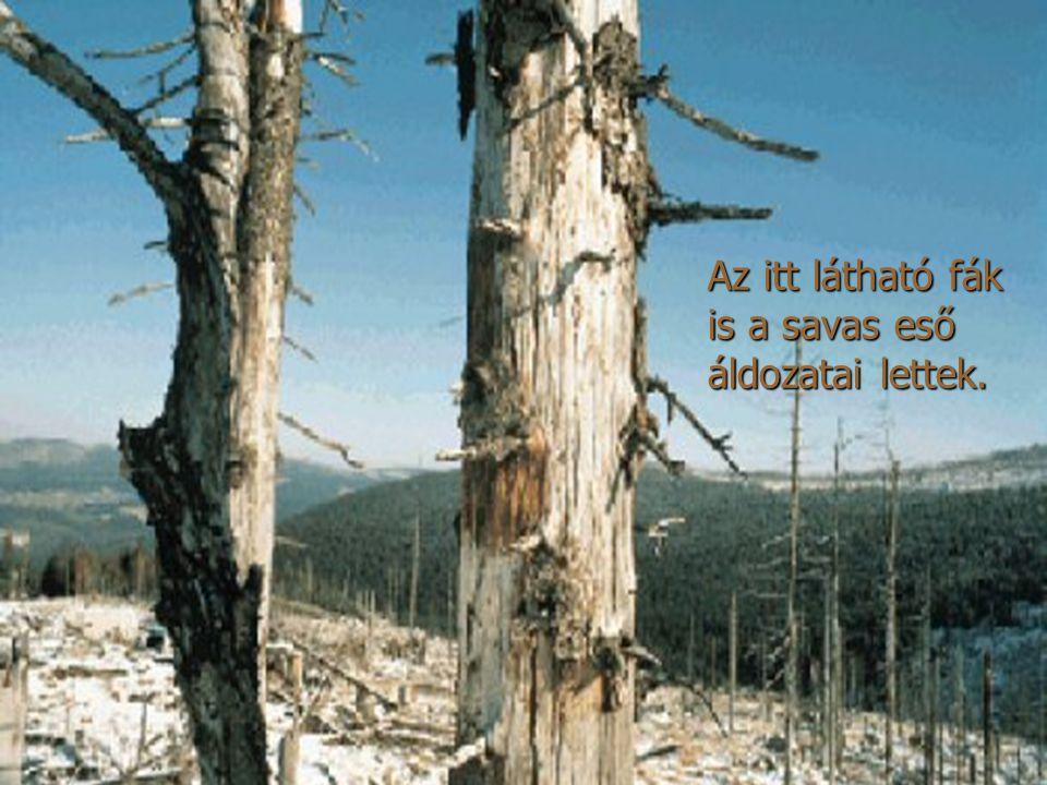 Az itt látható fák is a savas eső áldozatai lettek.