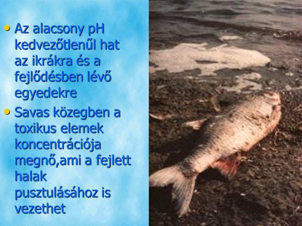 Az alacsony pH kedvezőtlenűl hat az ikrákra és a fejlődésben lévő egyedekre Az alacsony pH kedvezőtlenűl hat az ikrákra és a fejlődésben lévő egyedekre Savas közegben a toxikus elemek koncentrációja megnő,ami a fejlett halak pusztulásához is vezethet Savas közegben a toxikus elemek koncentrációja megnő,ami a fejlett halak pusztulásához is vezethet