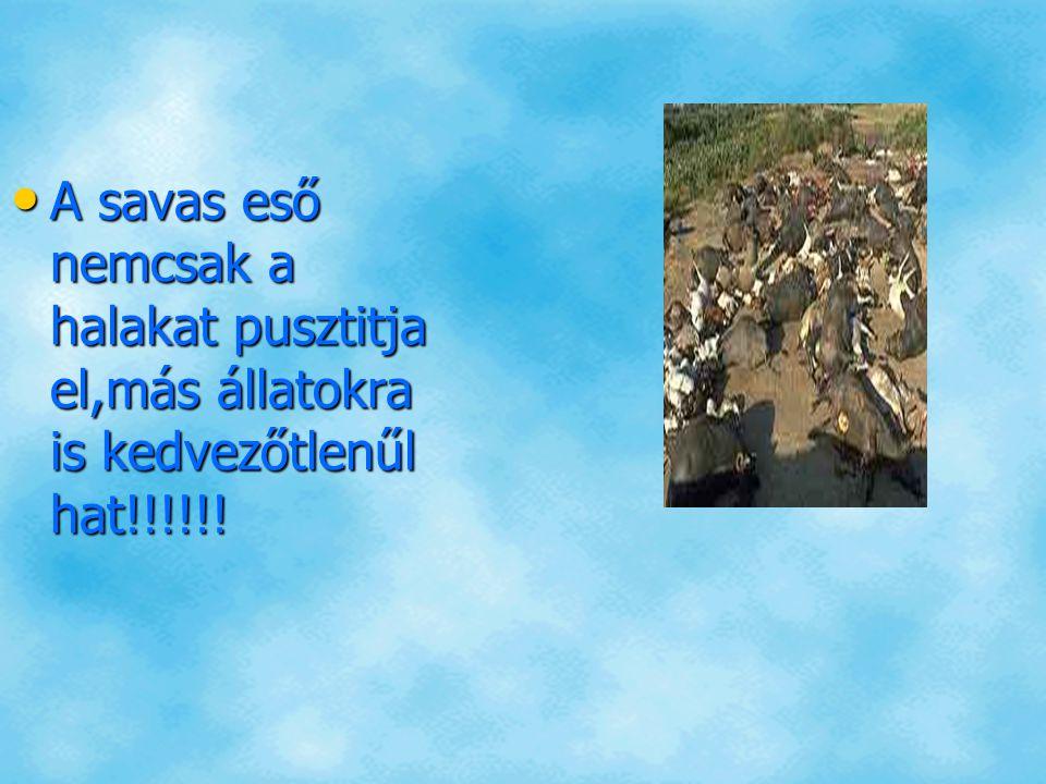 A savas eső nemcsak a halakat pusztitja el,más állatokra is kedvezőtlenűl hat!!!!!! A savas eső nemcsak a halakat pusztitja el,más állatokra is kedvez