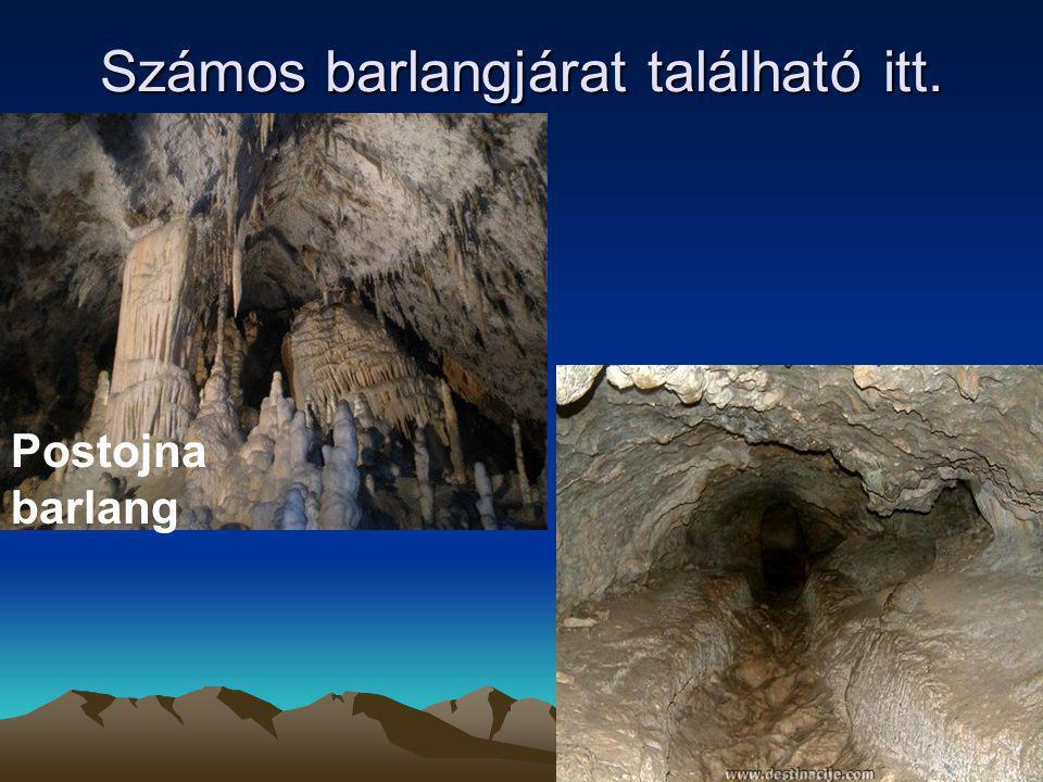 Számos barlangjárat található itt. Postojna barlang