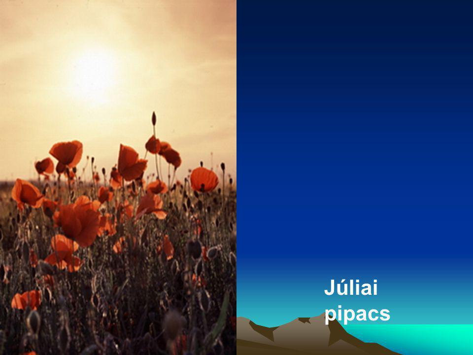 Júliai pipacs